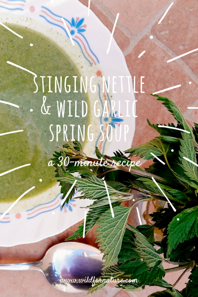 stinging nettle and wild garlic soup