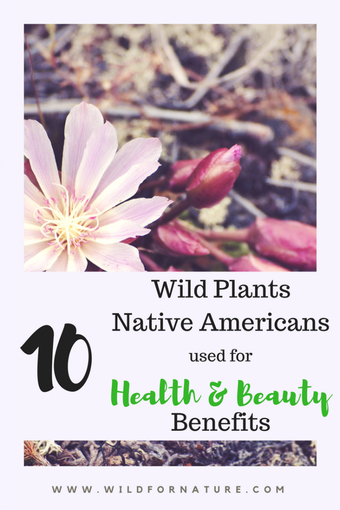 Top 10 Forgotten Wild Plants Native Americans used for Health and Beauty Benefits