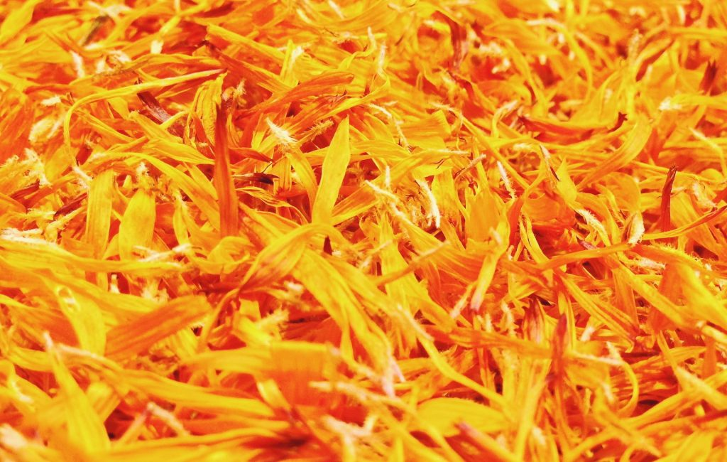 Calendula as a kitchen ingredient Fresh blossoms of calendula were used already in the Antique times as a substitute for saffron as an addition to fish or poultry dishes. Nowadays people add calendula leaves to salads, but you can even pick young shoots of calendula and pickle them in vinegar as you would cucumbers. You can also dry the petals and save them for winter; they put a nice boost of nutrition and color into all those stews and soups when it's bleak and cold outside. Calendula tea - 2 tbsp calendula petals (if fresh, 3- 4 tbsp if dry) - A cup of hot water Pour the water over the leaves and let the mixture sit from 5 to 10 minutes. After that, the tea is ready. You can make it with dried leaves as well. The leftover leaves from the tea can be used to make OBKLADKi for certain areas of your skin that need healing: in case of smaller wounds, cuts, bruises or sunburns.