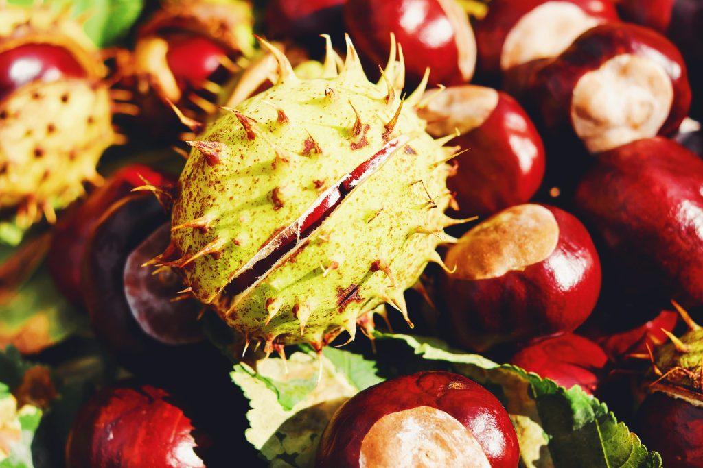 horse chestnut skin and hair benefits