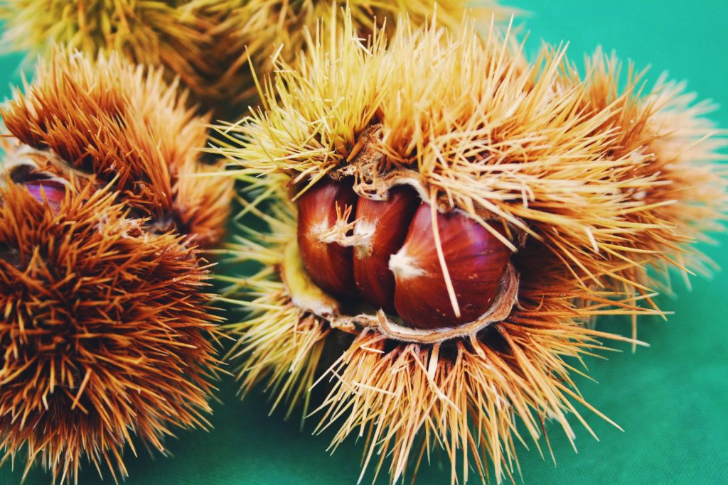 sweet chestnut skin and hair benefits
