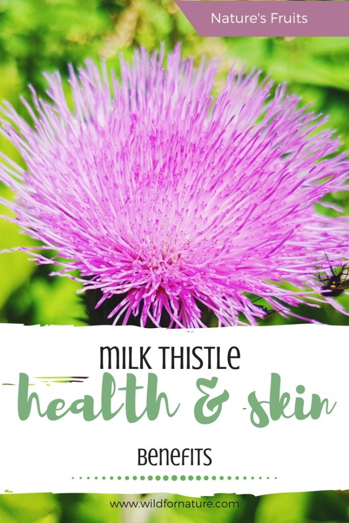 milk thistle health and skin benefits