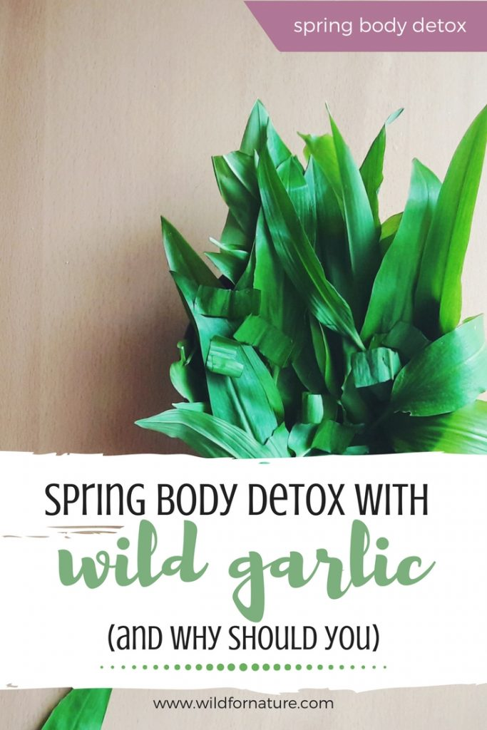 wild galic plant spring body cleanse