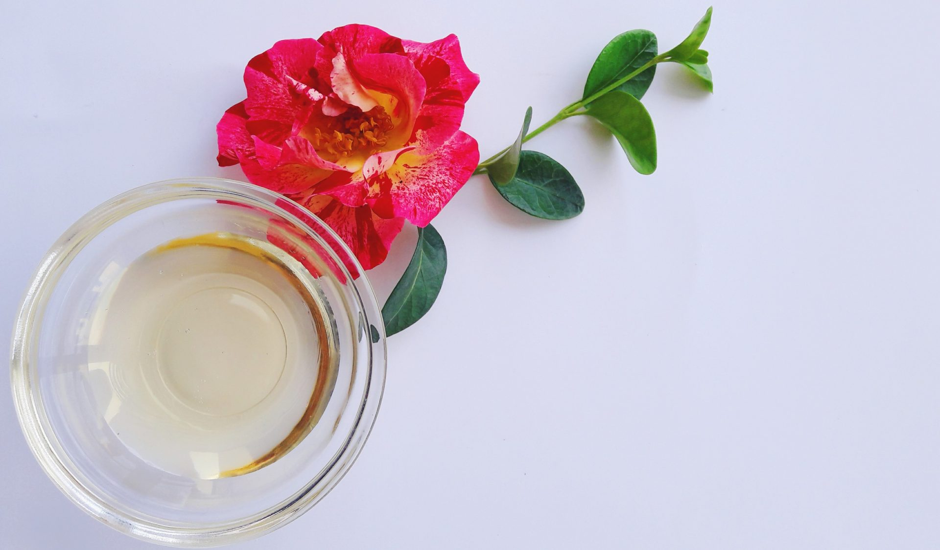 Luscious Camellia Oil Skin Benefits And How to Use It?