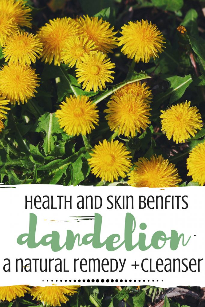 dandelion health and skin benefits