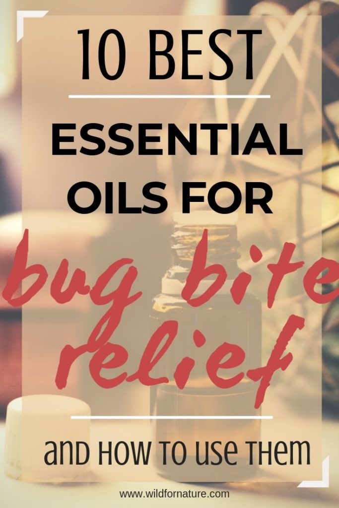 best essential oils for insect bites (1)