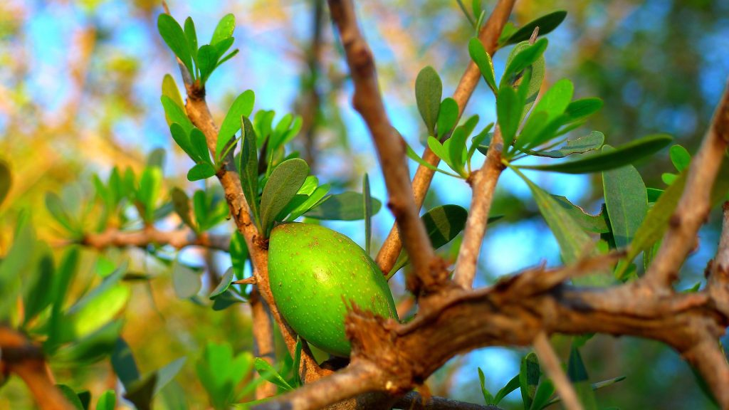 best argan oil for acne